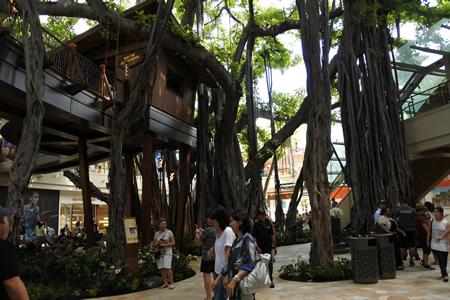 0826 international market place banyan new